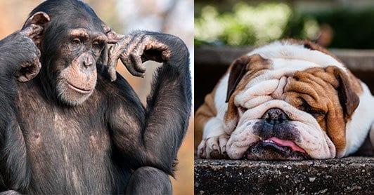 Monkey plugging ears and dog asleep